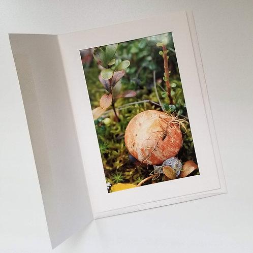 Greeting Card - Boreal Mushrooms 3