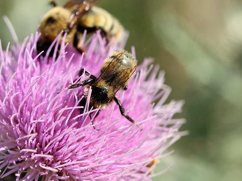 """Pink Pollen 3 (8""""x10"""" photograph)"""