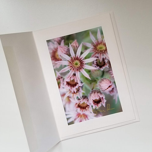 Greeting Card - Pink Pollen 2