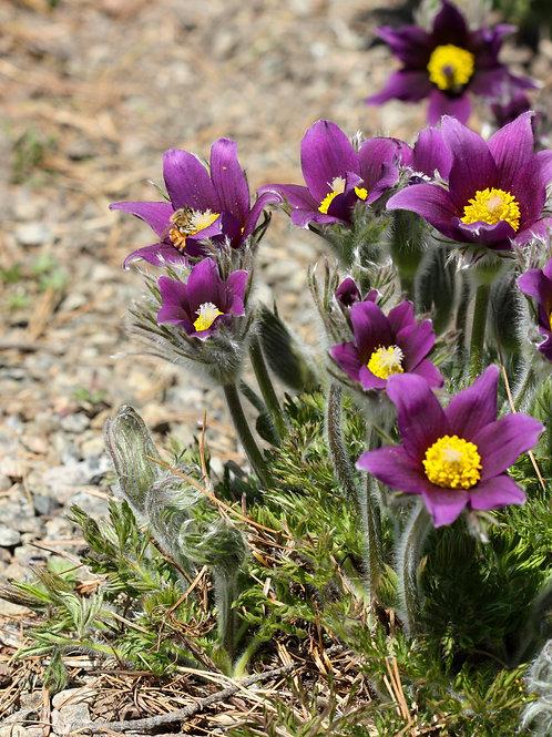 "Purple Petals 4 (8""x10"" photograph)"