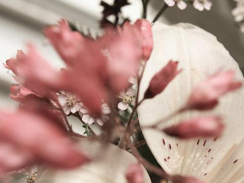 "Flower Study 05 (8""x10"" photograph)"