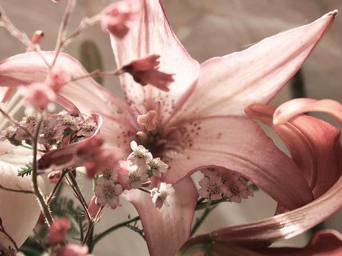 "Flower Study 06 (8""x10"" photograph)"