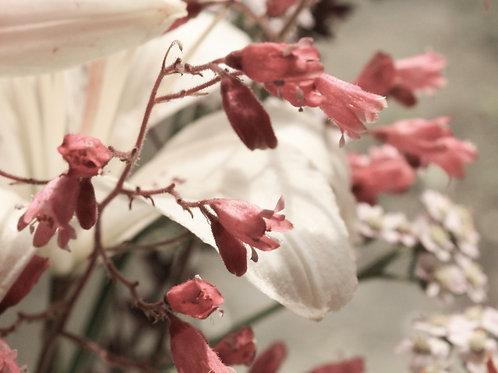 "Flower Study 03 (8""x10"" photograph)"
