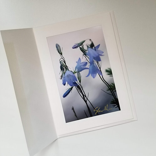 Greeting Card - A Boreal Bellflower