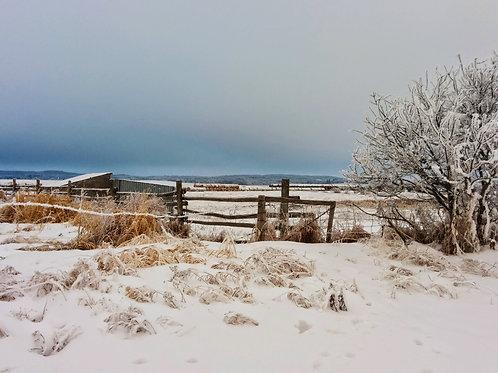 "Frosty Farm 3 (8""x10"" photograph)"