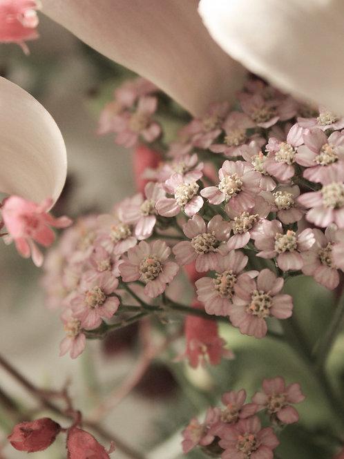 "Flower Study 11 (8""x10"" photograph)"