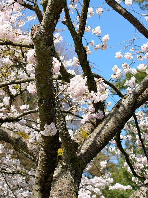 "Blossom 1 (8""x10"" photograph)"