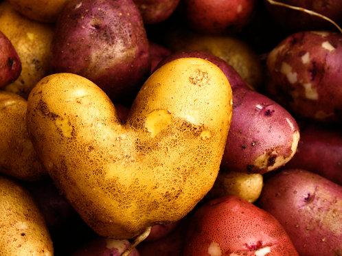 """Potato (8""""x10"""" photograph)"""