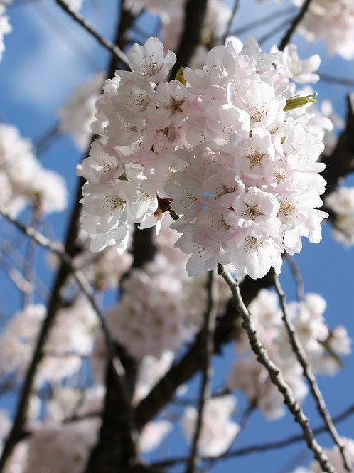 "Blossom 2 (8""x10"" photograph)"