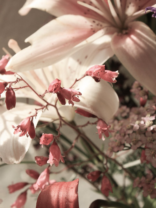 "Flower Study 07 (8""x10"" photograph)"