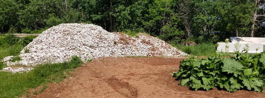 Pile of Oyster Shells!