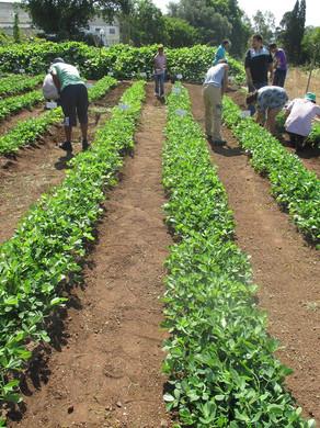 Lisbonne-agriculture solidaire  2.jpg
