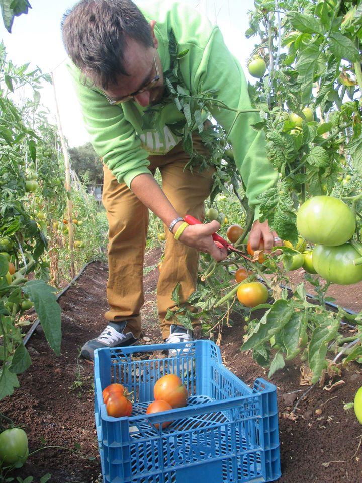 Lisbonne-agriculture solidaire 1.jpg