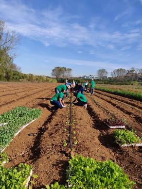 Lisbonne-agriculture solidaire 17.jpg