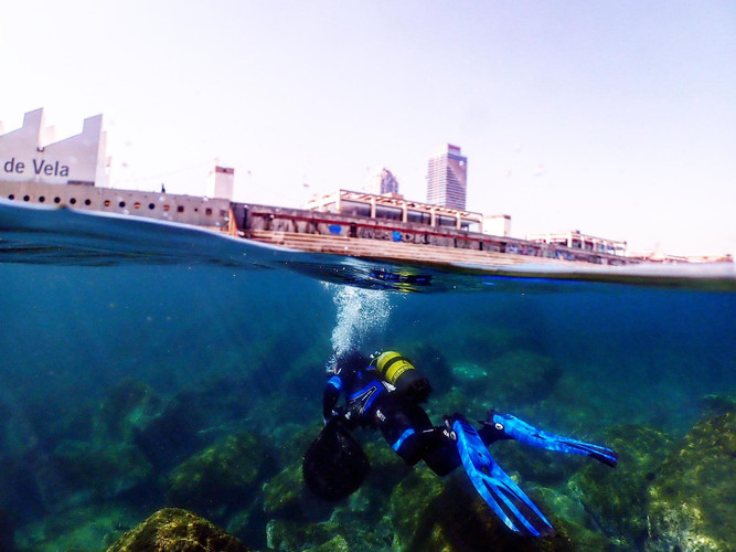 Marine Conservation in Barcelona photos