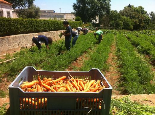 Lisbonne-agriculture solidaire 25.jpg