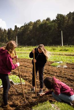 Lisbonne-agriculture solidaire 6.jpg