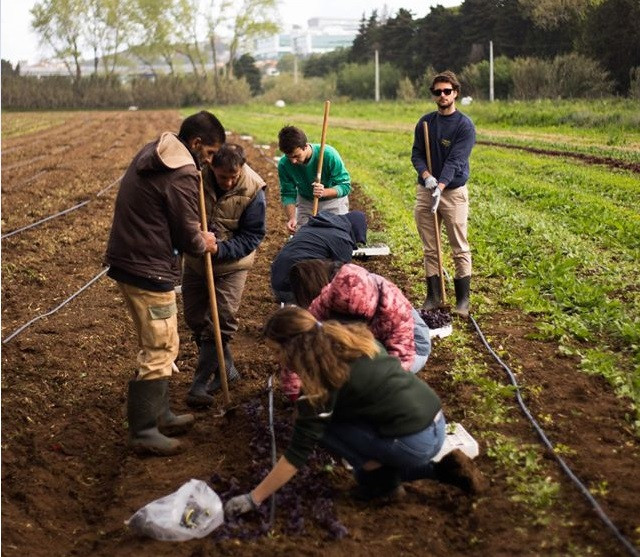 Lisbonne-agriculture solidaire 4.jpg