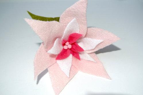 Light Pink Poinsettia
