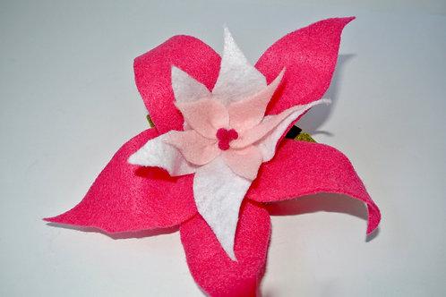 Double Pink Poinsettia