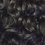 Thumbnail: Curly
