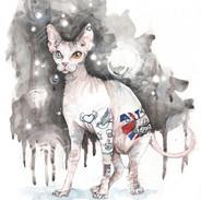 Sphynx Cat with tattoo/SphynxKatze mit Tattoo