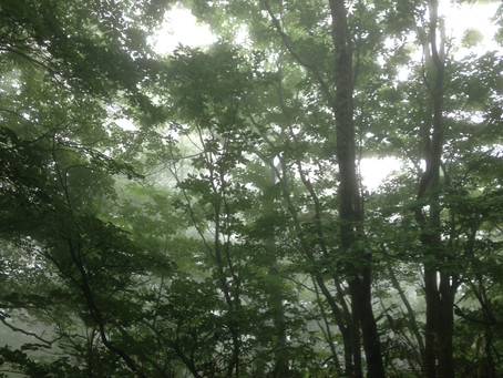 【七面山】7月参り 2か月連続の雨・・・