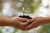 par-maos-segurando-planta-verde-junto-li