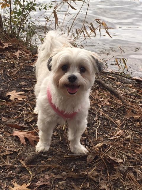 #petloss; small white dog at edge of lake
