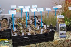 Grasses for sale
