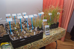 Grasses on sale