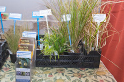 Selection of Grasses