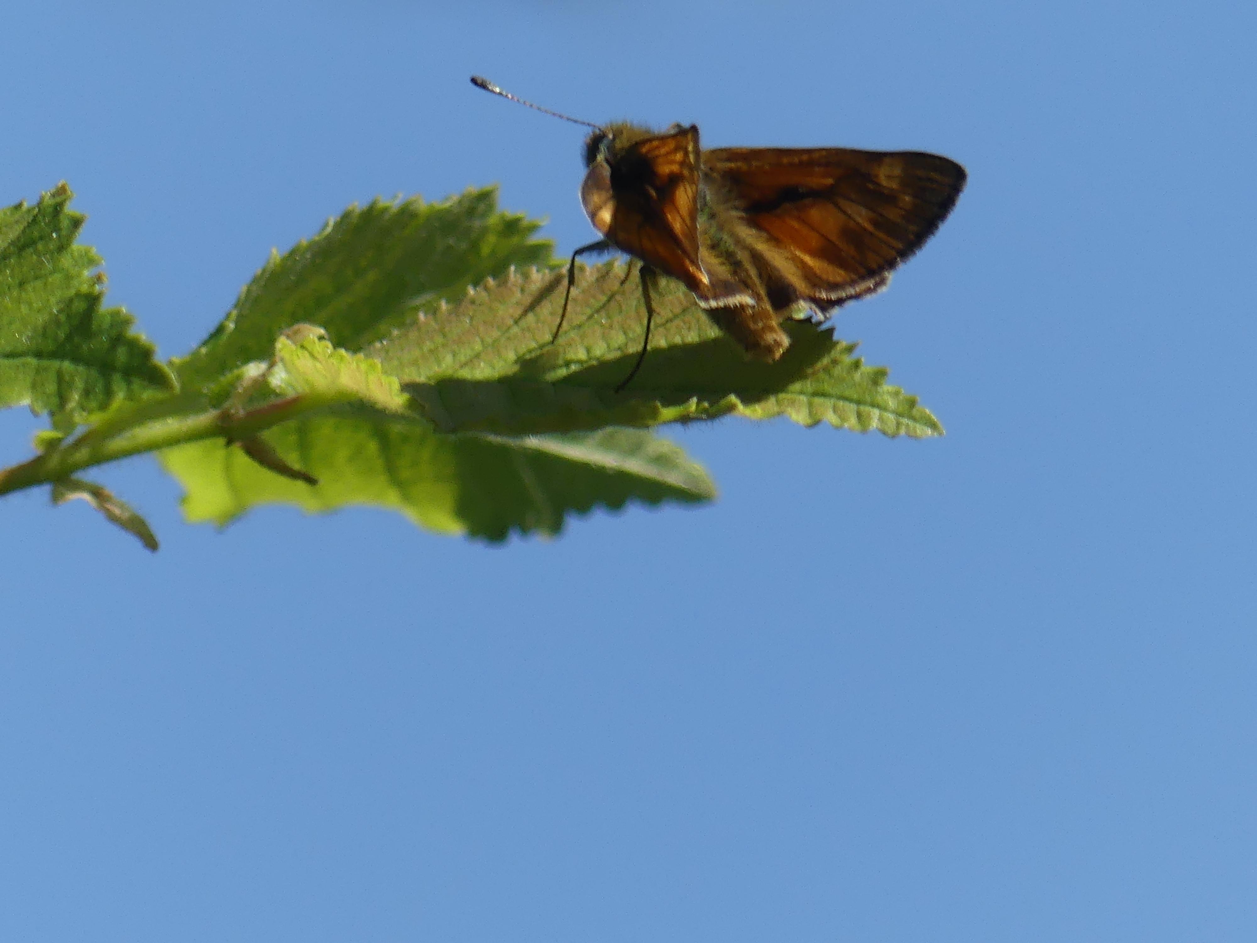 Butterfly Walk