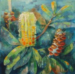 Banksia I