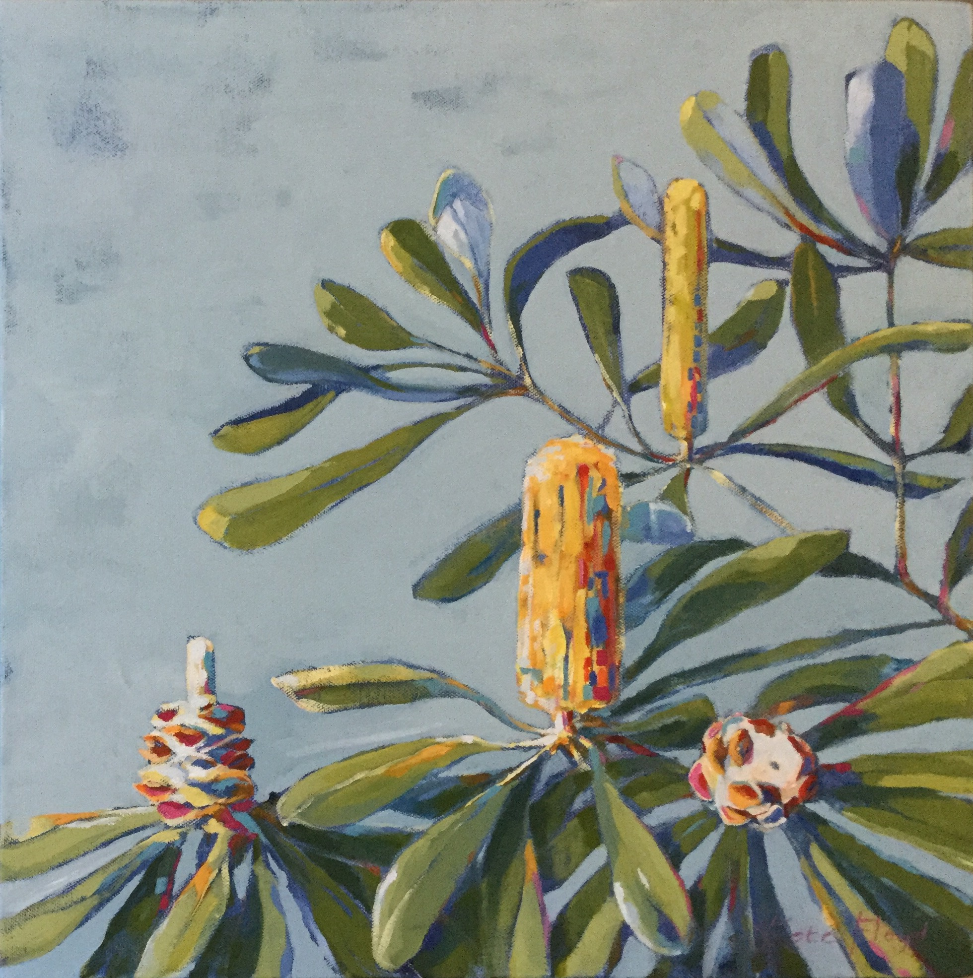 Banksia Blooms Large, 2017