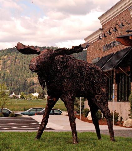 Moose, Kalispel, MT