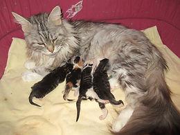 kittens 27-06-2020 1.JPG