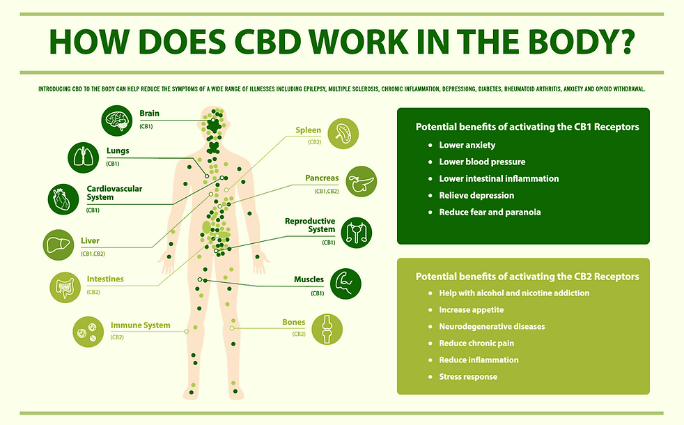 Endocannabinoid System _ Sutton Weed Farm.png