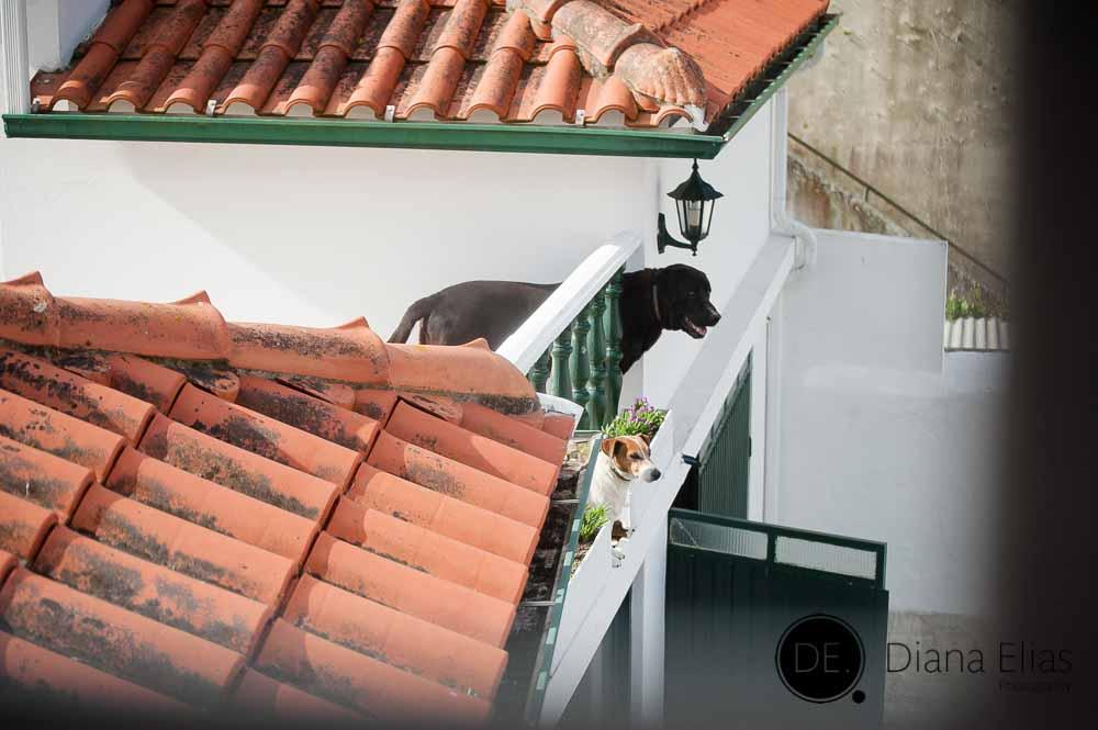 Casamento Sandra & Elson_01501