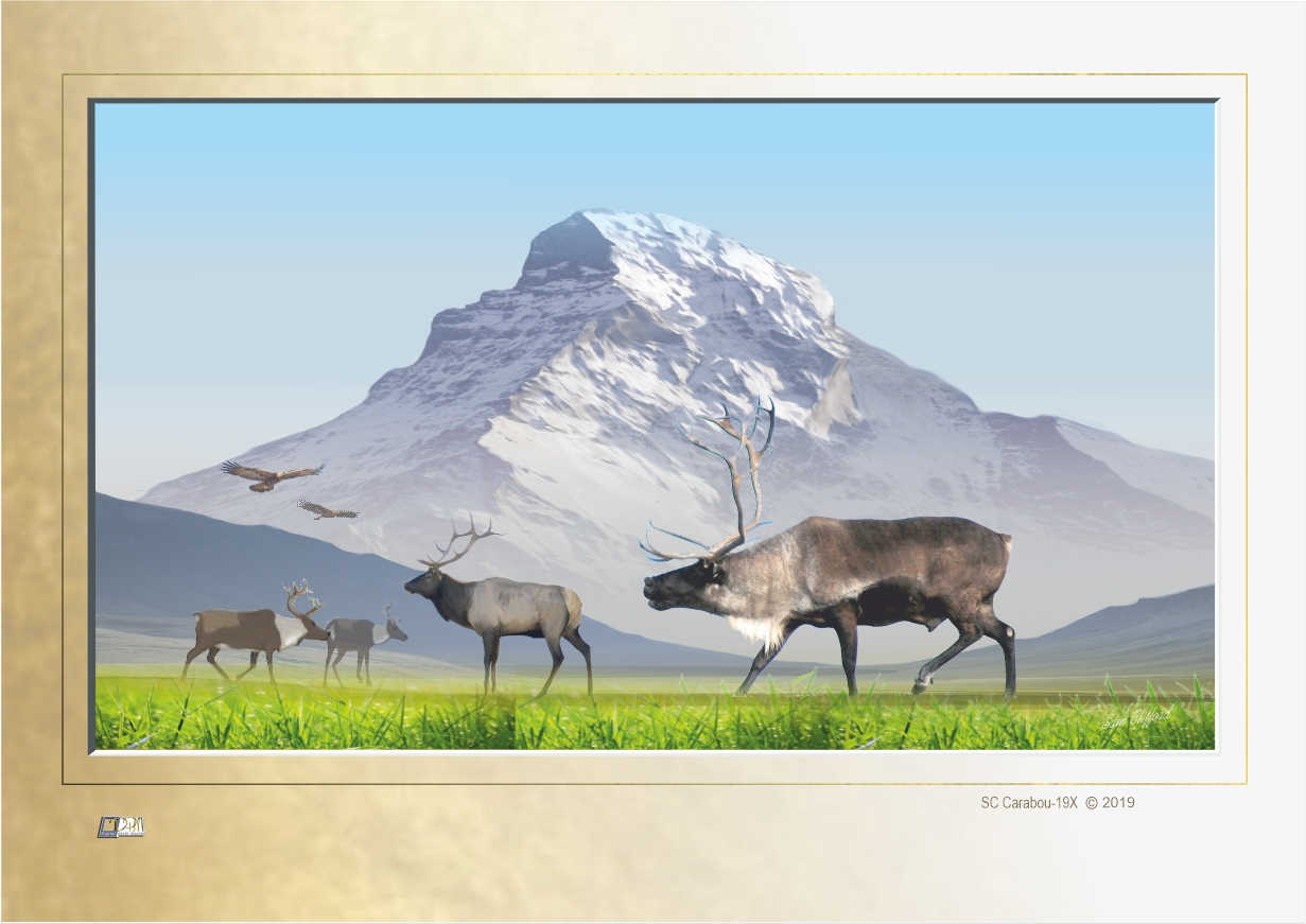 print code: SC Arctic Caribou-20