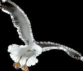BIRDS-3.png