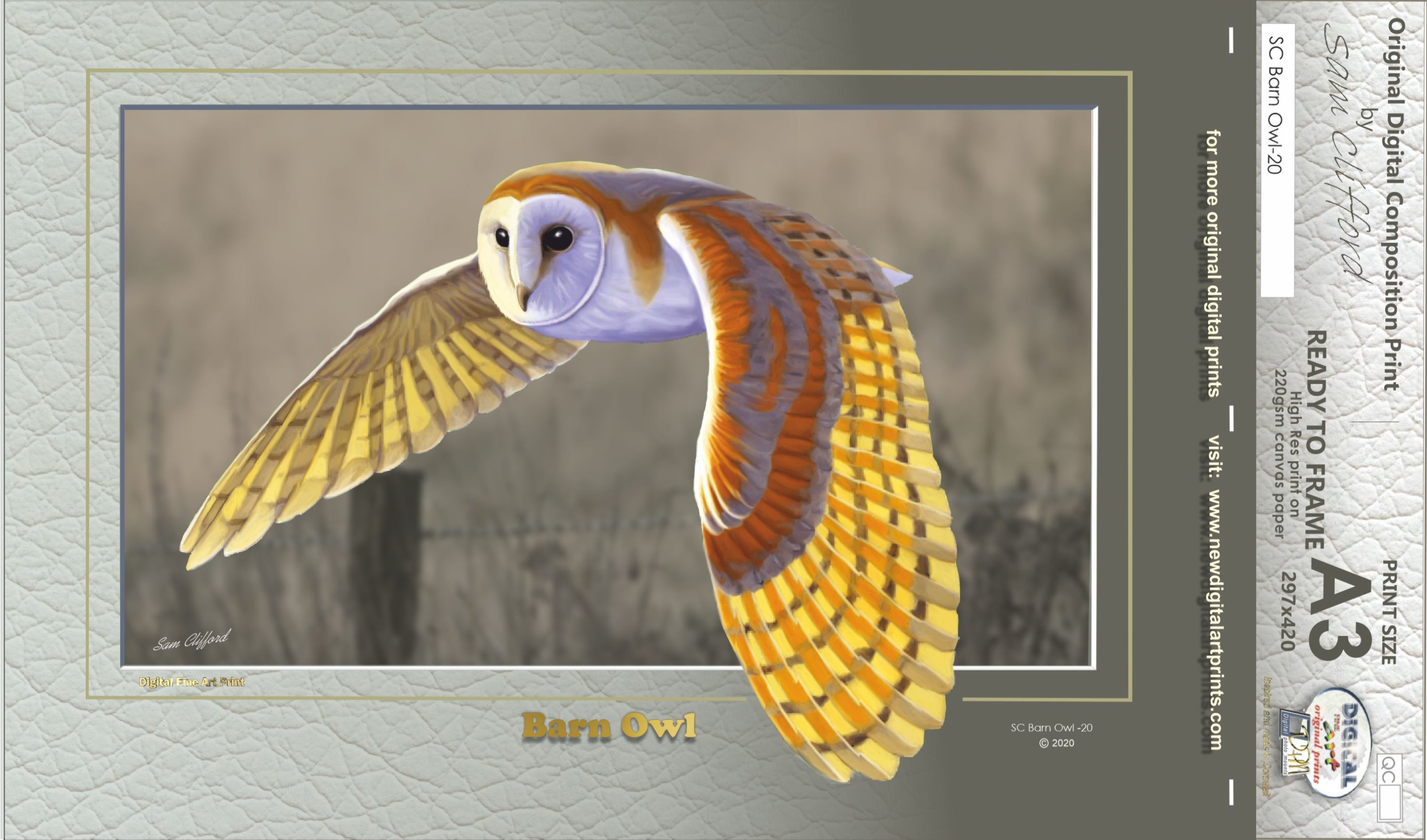 SC - Barn Owl-20