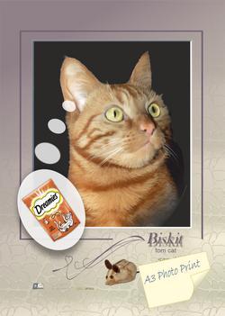BISKIT tom cat