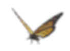 butterfly-1.png