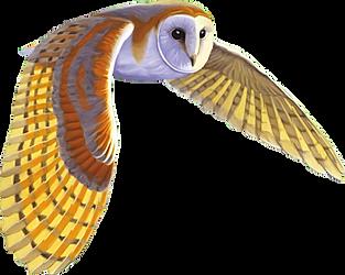DEALER owl.png