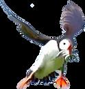 BIRDS-4.png