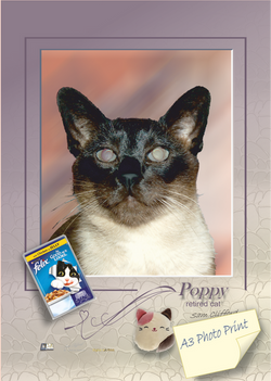 POPPY       retired cat