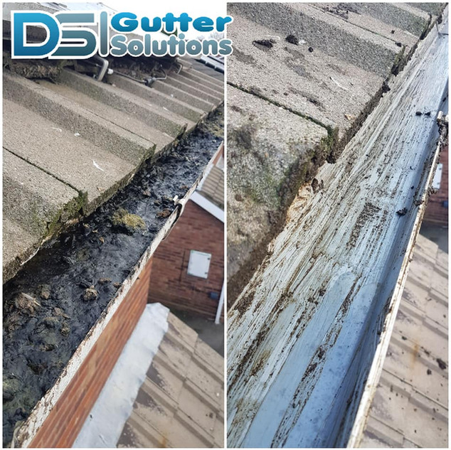 Gutter Clearout 3