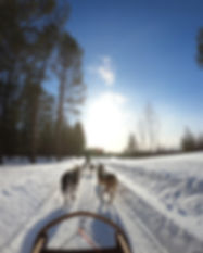 sled-pulled-by-dogs-2531014.jpg