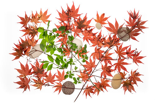 Maple Leaf Twigs And Stones